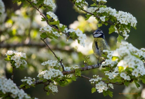 Bluey in the Blossom 2