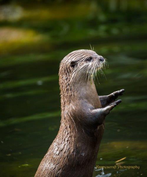 Fish Please, I Beg You
