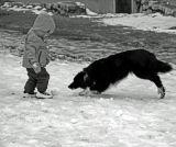 Dogged defence
