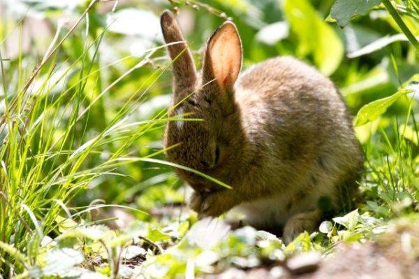 Praying Rabbit