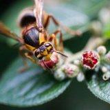 Wasp? It was big!!