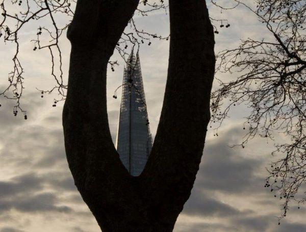 Shardian Tree