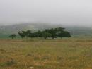 Mist on the Darling Hills