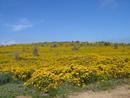 And deep yellows