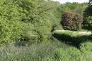 In Rousham park