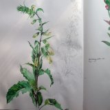 Sketchbook foxgloves