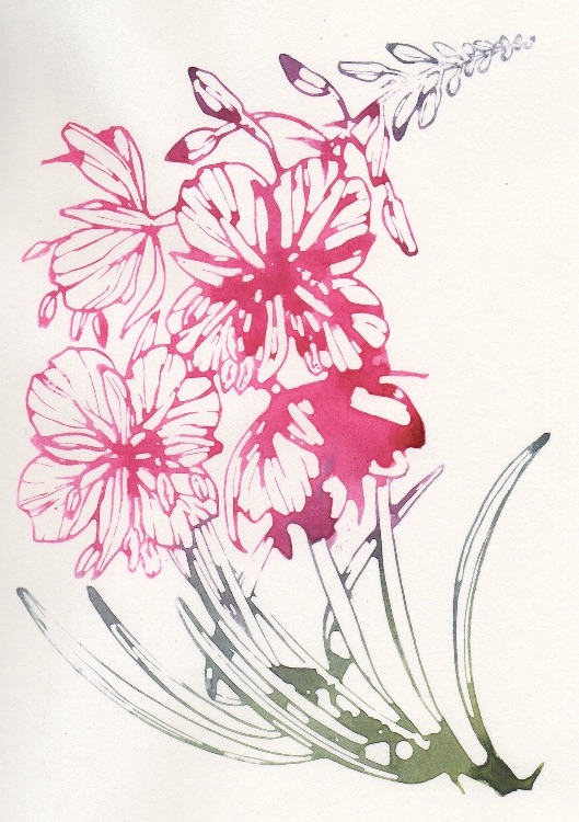 Willowherb watercolour print