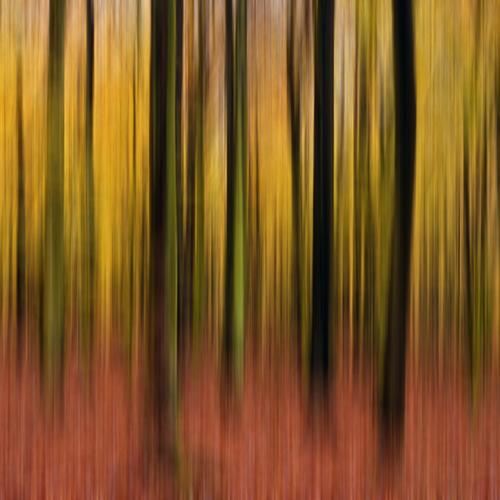 Autumn Beech Wood