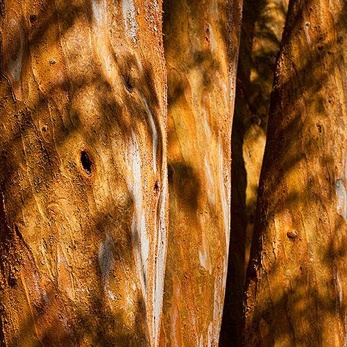 Bark Shadows