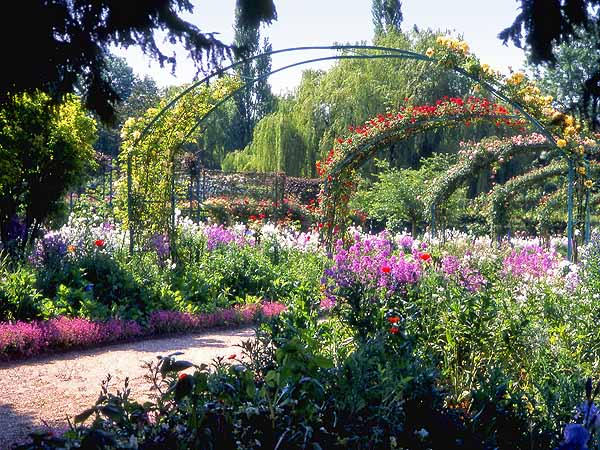 Summer Colour in Monet's Garden