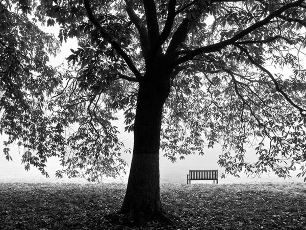 Sweet Chestnut and Seat