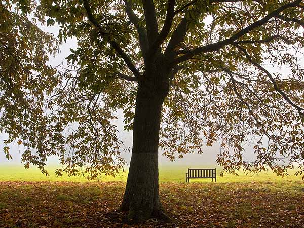 Sweet Chestnut and Seat - Misty Morning