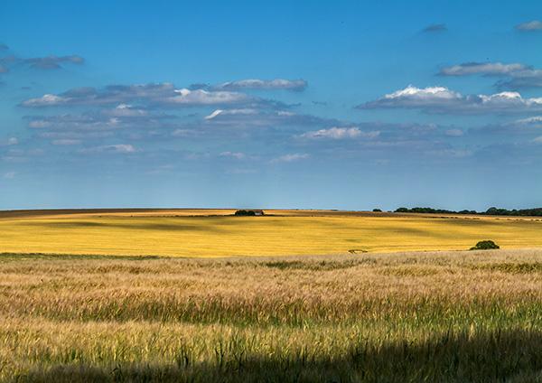 Summer Landscape above Bowerchalke