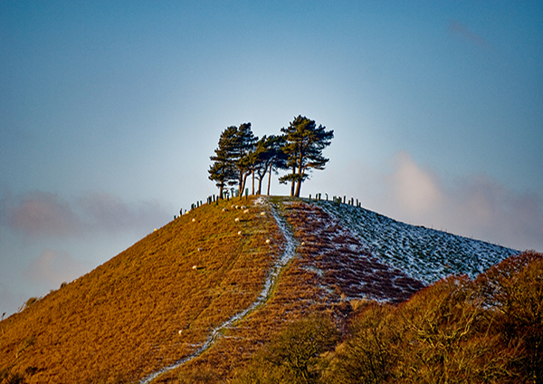 Colmer's Hill in Winter