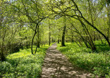 Garston Wood Nature Reserve in Spring