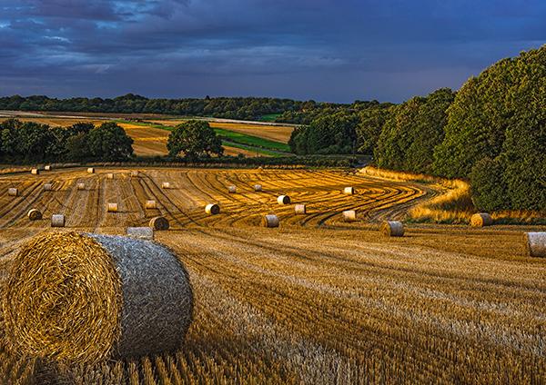 Gaunts Common Harvest
