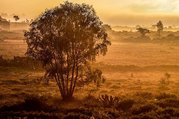 Mannington Heath, Sunrise