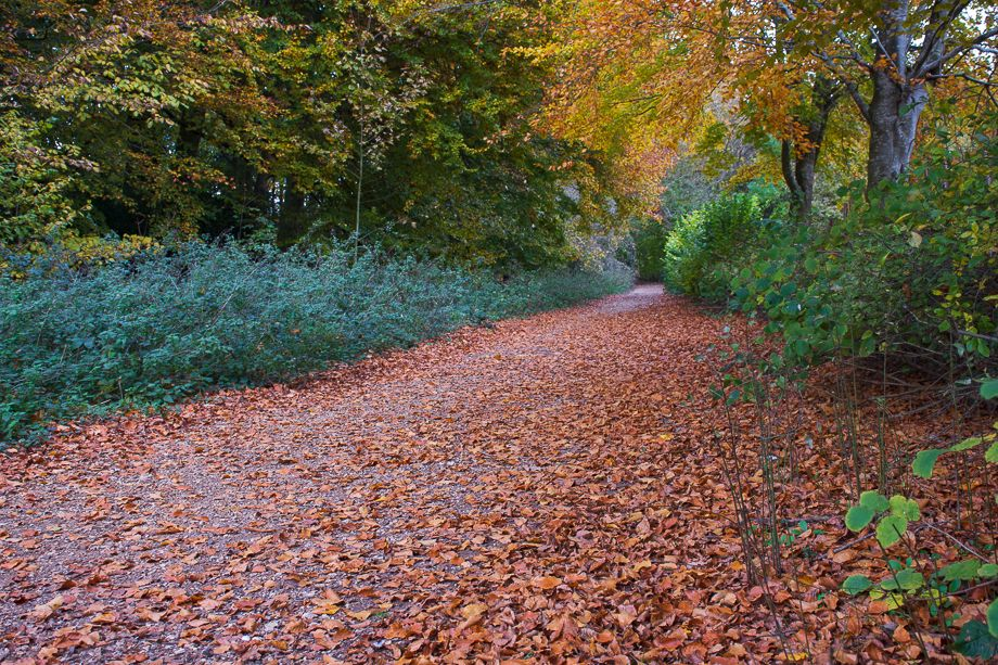 Autumn Colours at Crabtree