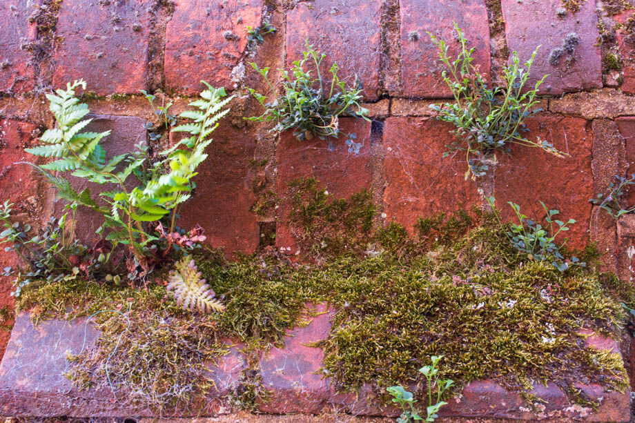 ... Nature Thrives (2)