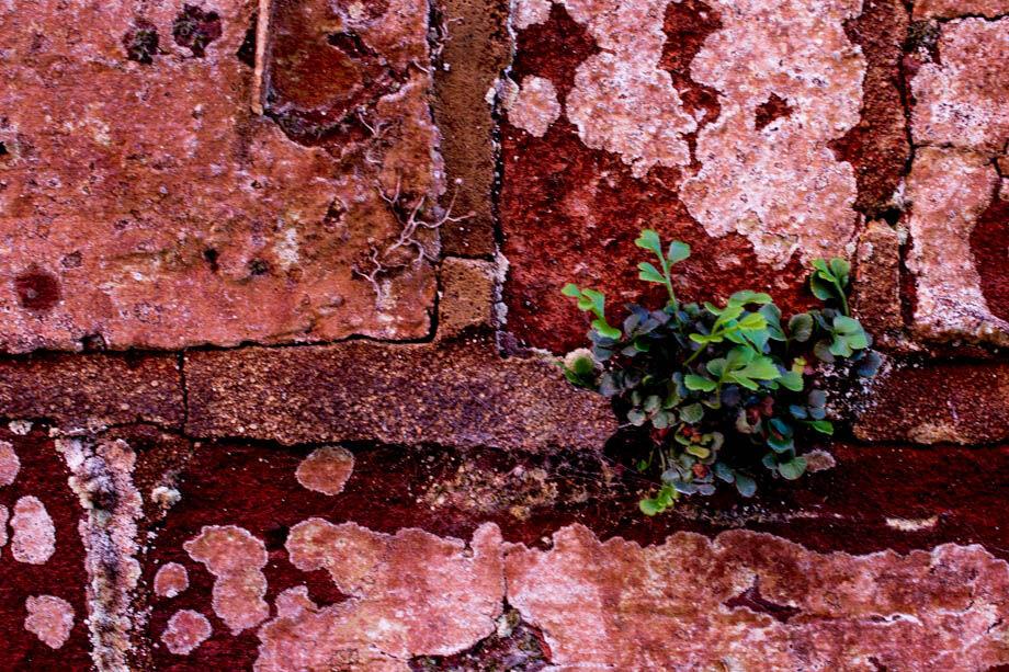 ... Nature Thrives (3)