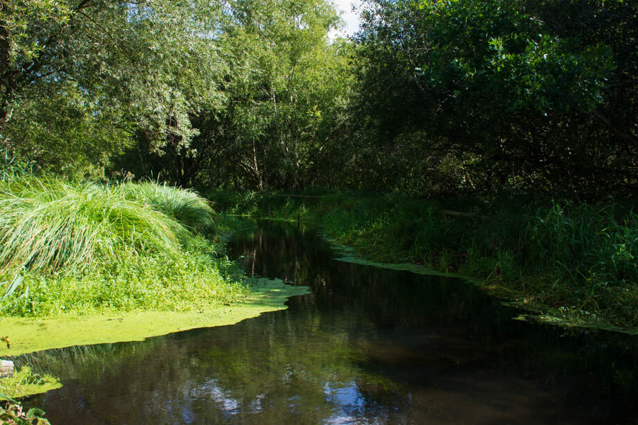 River Whitewater at Greywell