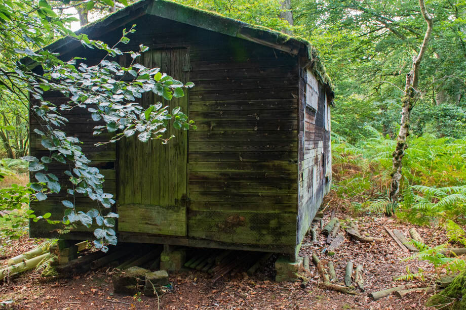 Wooden Hut in Butter Wood
