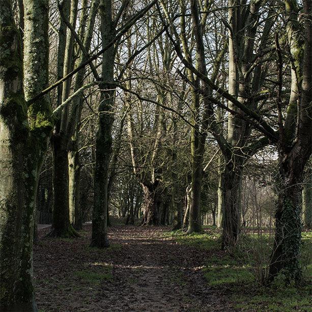 Muddy Pathway