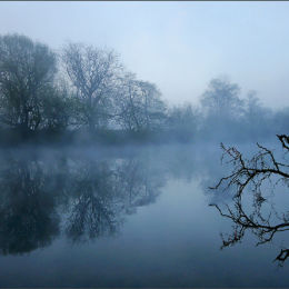 A Branch On The River Dee.