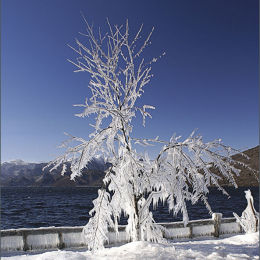 Ice Tree. Lake Chuzenji. Japan.