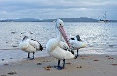 Nelson Bay September 2014 024