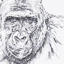 Bitam anxious Western Lowland Gorilla