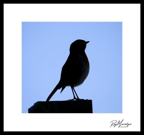 Hitchcock's The Birds?