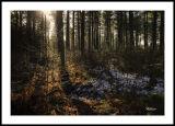 Tentsmuir Sunlight