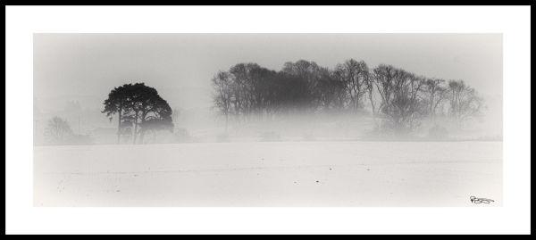 Trees in a Winter Mist