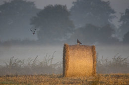 Sunrise, harvest time, Norfolk