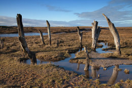 Stumps, Thornham Marshes, Norfolk