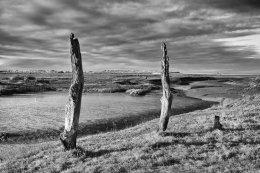 Stumps in Thornham Creek, Norfolk
