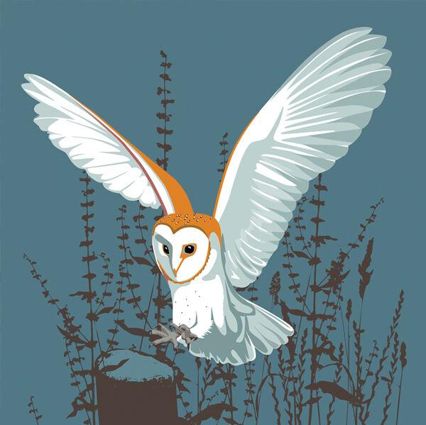 BARN OWL RM062