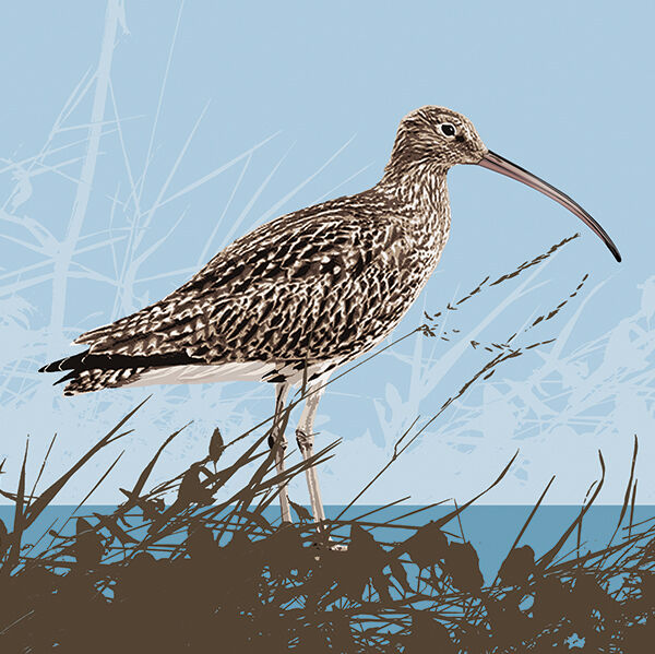 CURLEW RM020