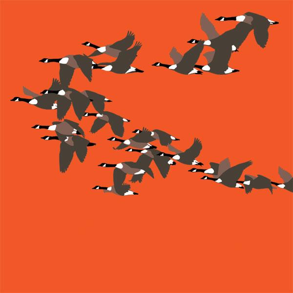 Canada Geese RM039