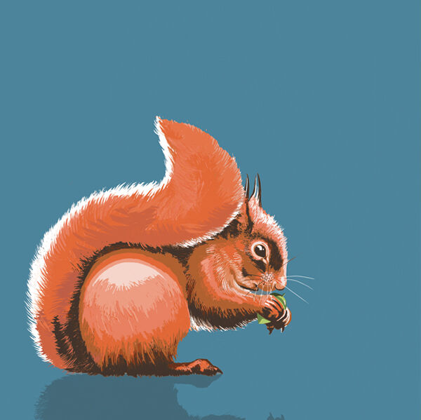 RED SQUIRREL RM022
