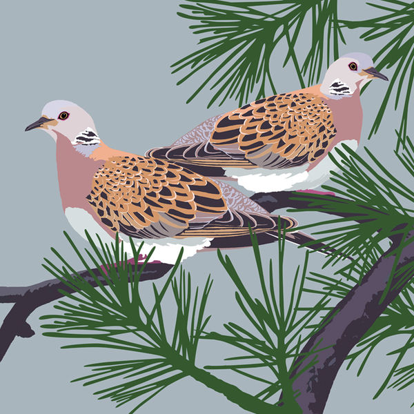 TURTLE DOVES RM030