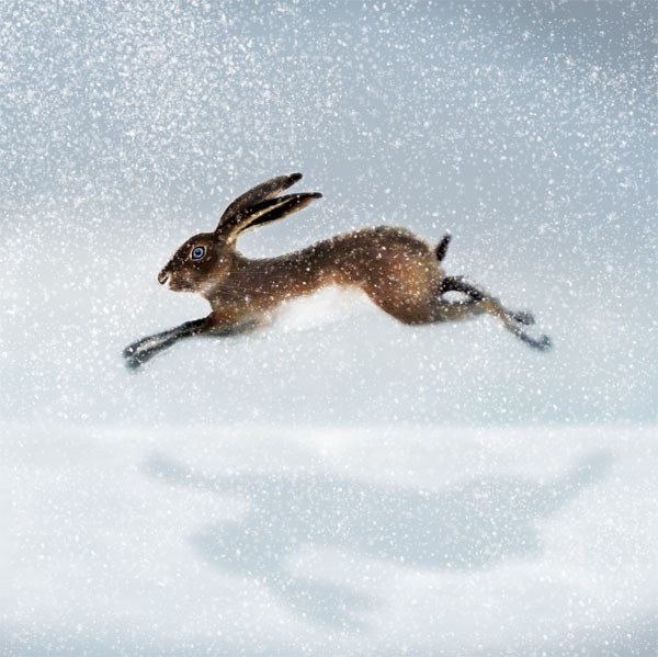 HARE IN THE SNOW RM025