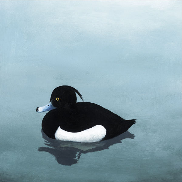 Tufted Duck rm004