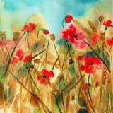 Poppies in cornfield (card)