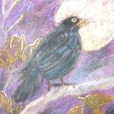 Blackbird (The Beatles) £30