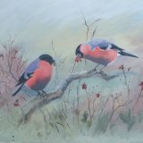 Bullfinches and Berries