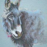Donkey (Sold)