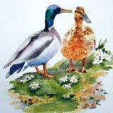Ducks and Daisies