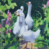 Geese (sold)